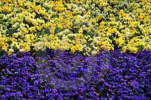 Flower Land Royalty Free Stock Photo - Image: 4937195