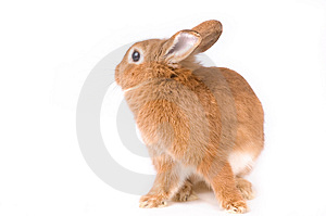 Rabbit Free Stock Images