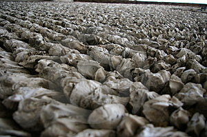 Shell Wall Royalty Free Stock Image - Image: 4955146