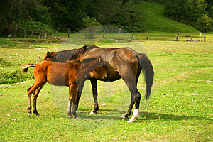 Horses Stock Photography - Image: 4960262