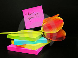 Thank you message and red tulip on black background Stock Photography