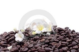 Cofee Seed Stock Image - Image: 4971331