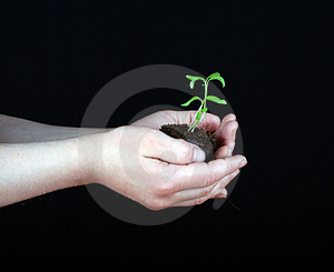 New Life Royalty Free Stock Photos