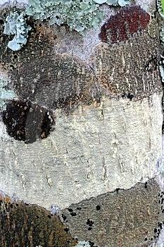 Картина 3 дерева Стоковые Фотографии RF