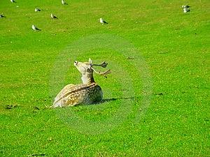 Bambi Stock Photos