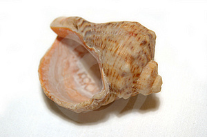 Sea Shell Stock Images - Image: 54764
