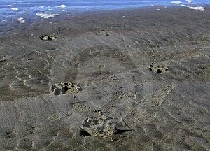Pawprints sur la plage Image libre de droits