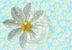 Bubbly Daisy Free Stock Image