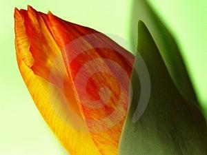 2 van de lente die uit komen Stock Afbeelding