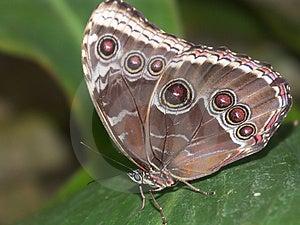 Butterfly Macro #6 Free Stock Photos
