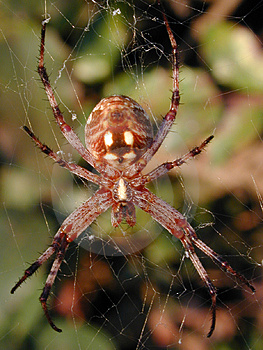 Spider Tangled In Web Free Stock Photo