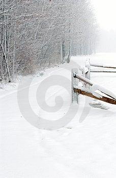 Winter Path Free Stock Photo