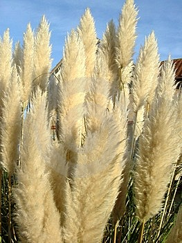 Feathery plant Stock Image