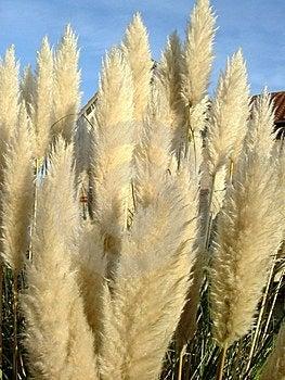 Feathery Plant Stock Image