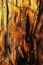 Sunkissed Bark Stock Image
