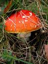 Mushroom Free Stock Photography