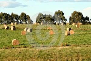 Harvest Royalty Free Stock Photos - Image: 507058