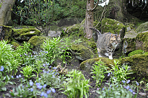 Tabby Cat Walking Stock Image - Image: 5001711