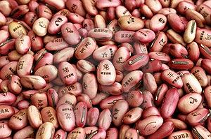 Bean Seeds Stock Photos - Image: 5004813