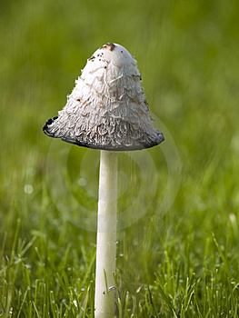 Wild Fungi Stock Images - Image: 5015114