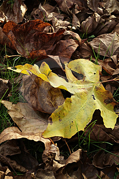 Autumn, Fall Royalty Free Stock Image - Image: 5024366