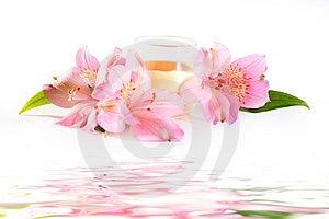Pink Free Stock Photo