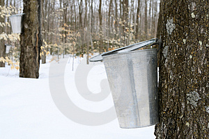 Droplet Of Maple Sap Falling Into A Pail Royalty Free Stock Photos - Image: 5048378