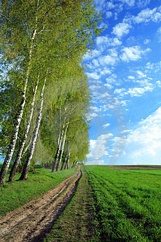 Lane In A Field Royalty Free Stock Photography - Image: 5070497