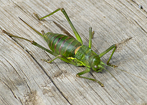 Green Bug Royalty Free Stock Photo - Image: 5074145