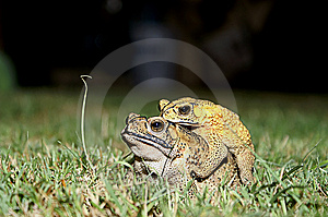 Frog Lover Stock Photo - Image: 5096960