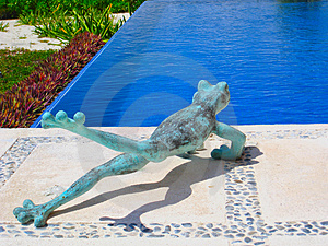 Frog Taking The Plunge Royalty Free Stock Images - Image: 5098269