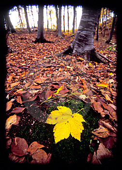 Autumn In Forest Royalty Free Stock Photo - Image: 5106165