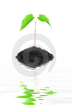 Small growing green plant isolated Stock Photo