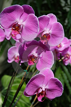 Purple Orchids Up Close Stock Image - Image: 5115701
