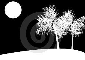 Tropical Night Stock Photos - Image: 5117843