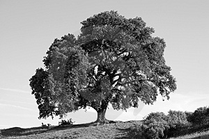 Mighty Tree Stock Photography - Image: 5119282