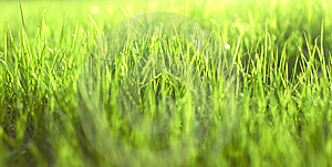 Green Vibrant Bright Grass Royalty Free Stock Images - Image: 5122229