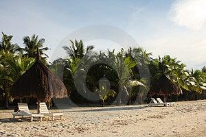 一个安排在树荫下 图库摄影 - 图片: 5133952
