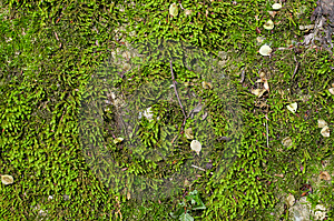 Wet Green Moss Background Royalty Free Stock Photo - Image: 5139855