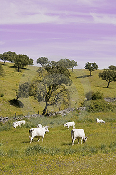 Landscape With Cows Stock Photos - Image: 5145143