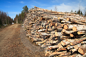 Cut Logs At The Edge Of The Forest Stock Image - Image: 5145981