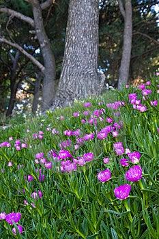 Purple Flower Garden Royalty Free Stock Photo - Image: 5147885