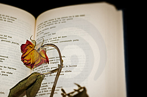 Close-up Of A Dried Rose On Open Book Pages Stock Photos - Image: 5165813
