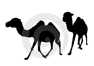 Camels Walking Royalty Free Stock Photos - Image: 5175778