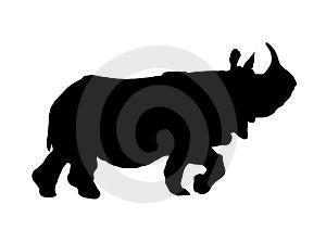 Rhino Walking Stock Photo - Image: 5175790