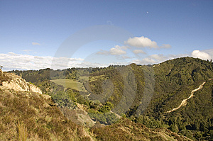 Bush Near Wanganui Stock Photography - Image: 5183042