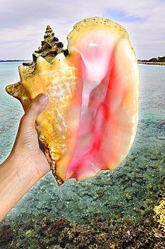 Seashell Stock Photos - Image: 5193273
