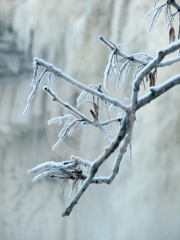 Frozen Stock Images - Image: 520624