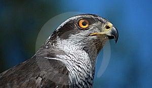 Predator Royalty Free Stock Photography - Image: 5200957