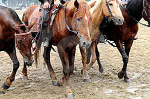 The Walking Horses Stock Images - Image: 5206354